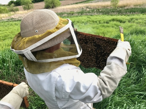 Ali searches for the queen bee and assesses how the bees are reproducing