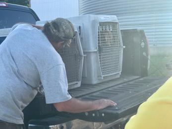Bob Severson peaks inside the dog kennels after the kids are captured