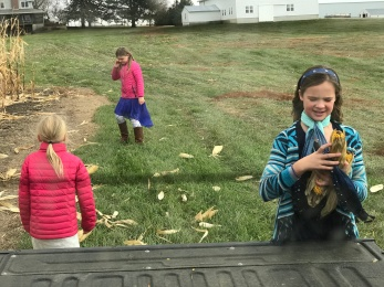 Matt and the girls fill the pickup with feed corn