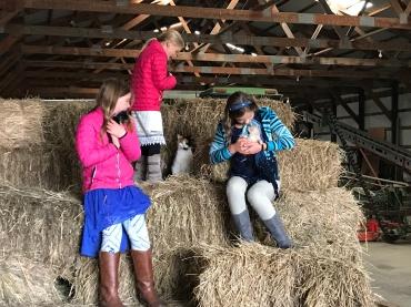 John's barn full of hay and kittens